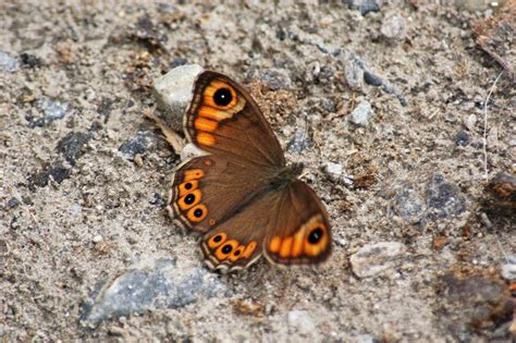 Brown and Orange Butterfly · Free Stock Photo