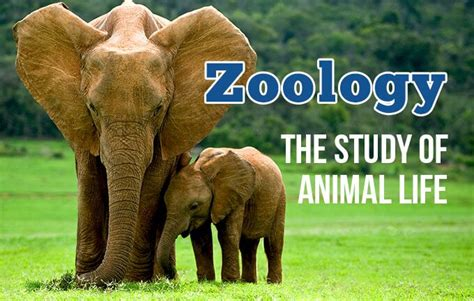 14 Zoology Study Abroad Programs for Students from All