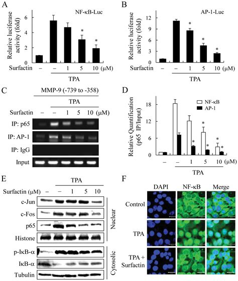 Surfactin suppresses TPA-induced breast cancer cell