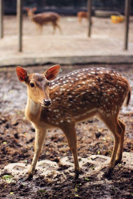 Brown and White Spotted Deer · Free Stock Photo